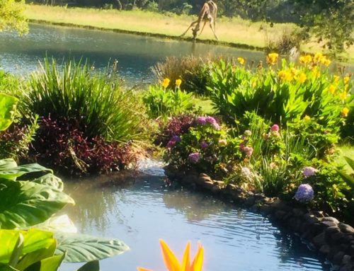 Mpumalanga:  A winter floral paradise to delight your tired heart